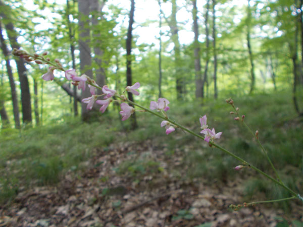 Pink flowers in the woods at Durward's Glen