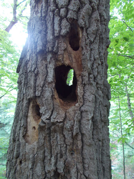 Hole through tree