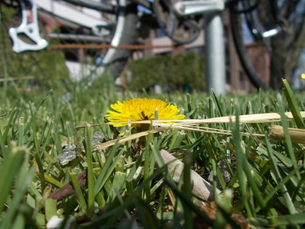 DandelionBike_edited
