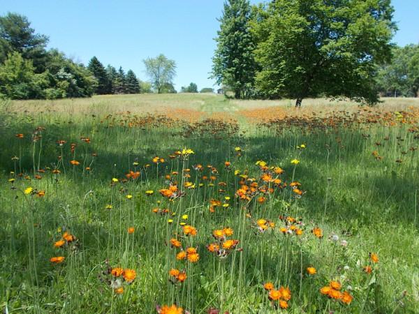 Meadow DSCN4326_edited
