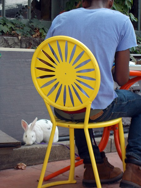 Student at UW Memorial Union with harness-wearing bunny on leash