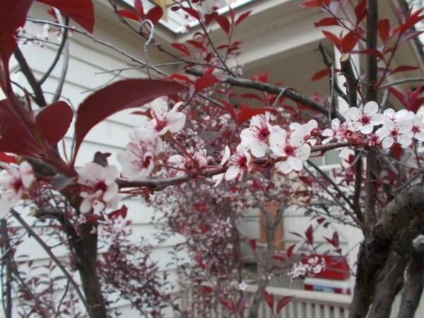 TreeFlowersWhiteHouse